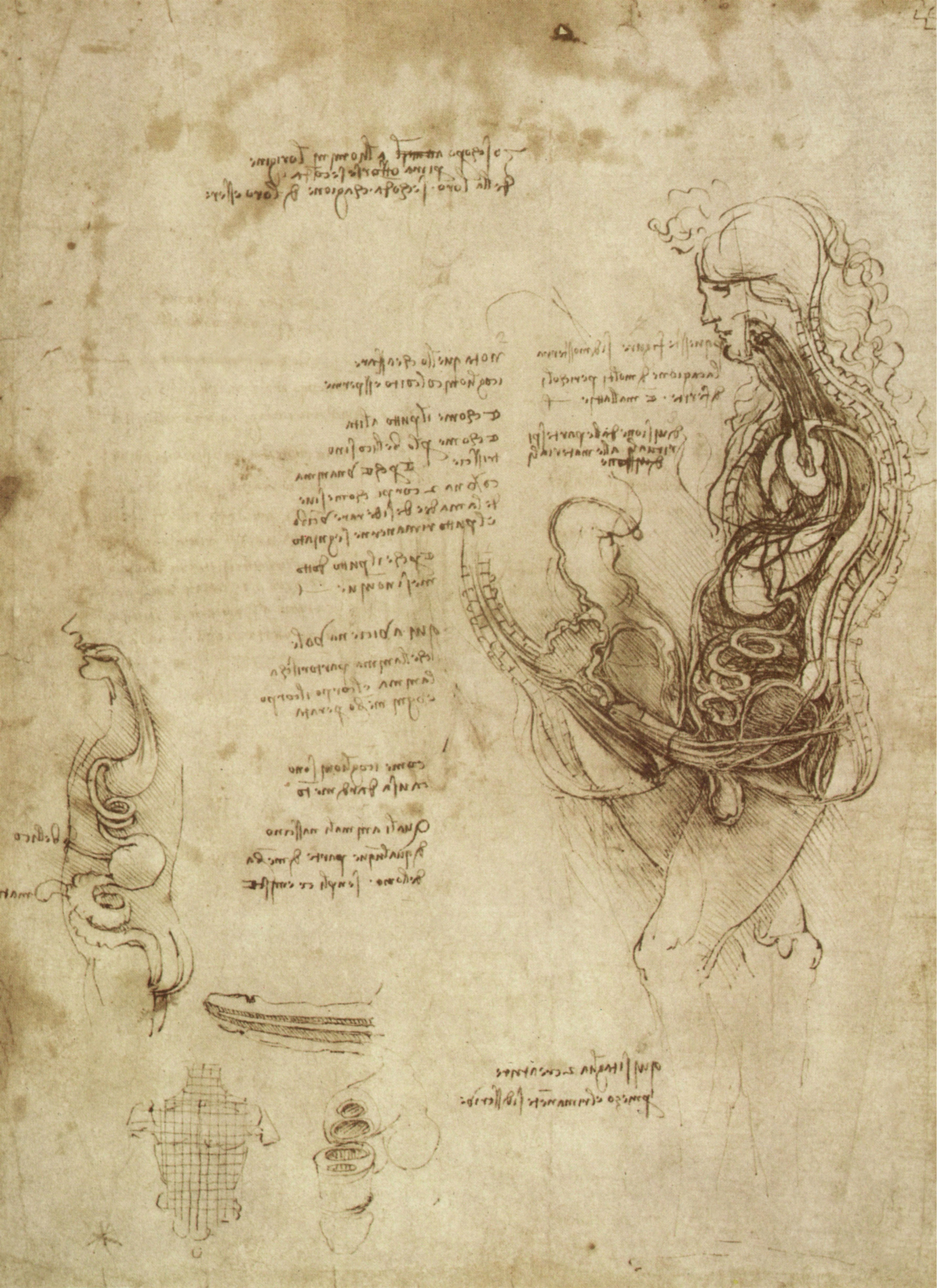 Leonardo da Vinci Coitus section